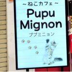 キャットカフェ ププミニョン(横須賀中央)
